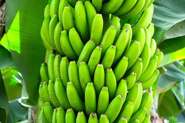 frutta esotica platano