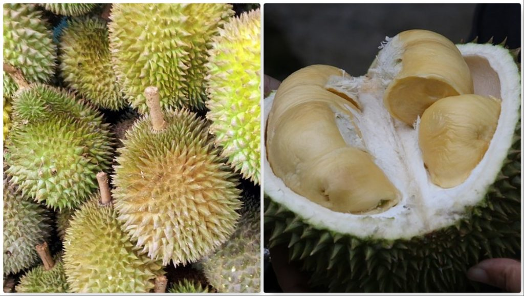 durian frutta esotica